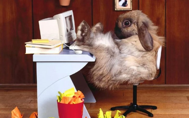 rabbit at desk